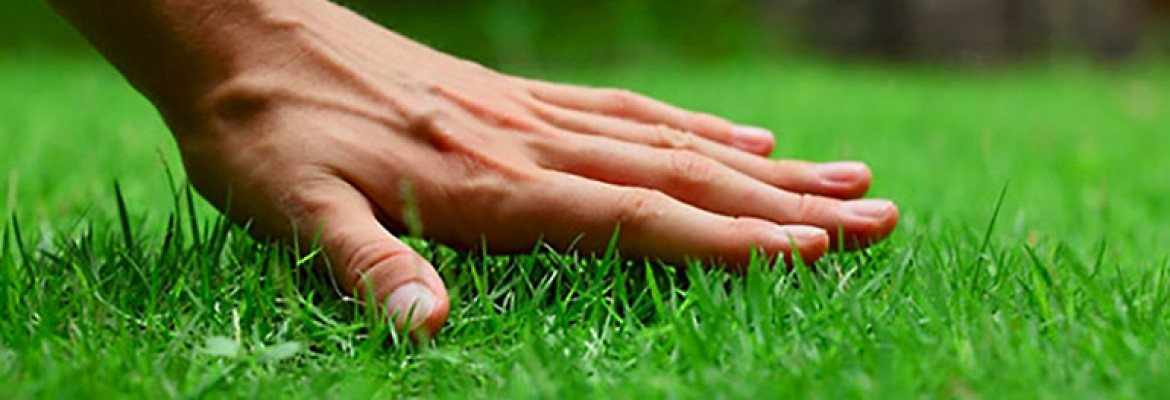Utah specialized lawn care service